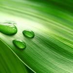 ISO 14046: Norma Internacional sobre la Huella Hídrica