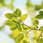 Evaluación del impacto medioambiental